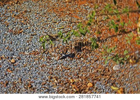 Small Lizard Hardly Visible Near Tree Branch