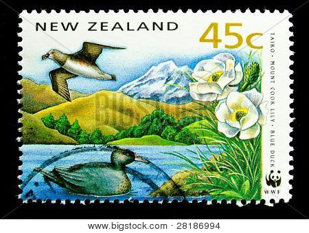 NEW ZEALAND - CIRCA 1991: A stamp printed in New Zealand, shows a giant taiko mount cook lily, blui duck , circa 1991