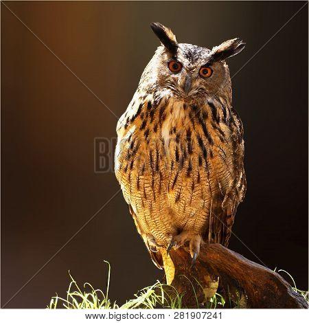 Eurasian Eagle Owl (Bubo bubo). Bird of prey poster