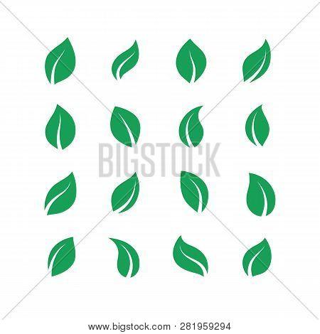 Flat Leaves Set. Green Simple Forest Leaf, Herbal Vegan Plant Set, Eco Fresh Energy Labels. Vector G