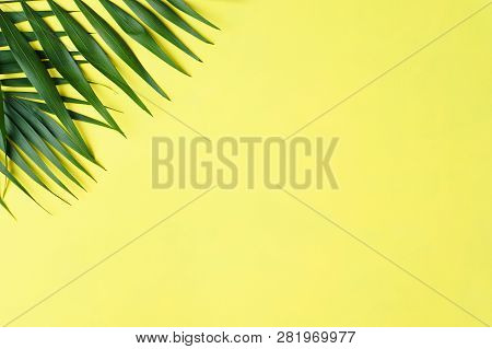 Summer Vacation, Travel. Ocean Shore, Tropical Beach, Sea Coast. Exotic Palm Leaves On Bright Backgr