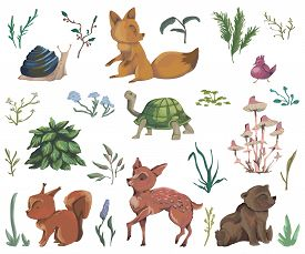 Collection Of Forest Animals, Mushroom, Plant, Flowers, Berry, Cones. Decorative Elements In Waterco