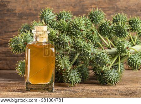 Ricinus Communis - Castor Oil Bottle With Castor Fruits, Seeds And Leaf