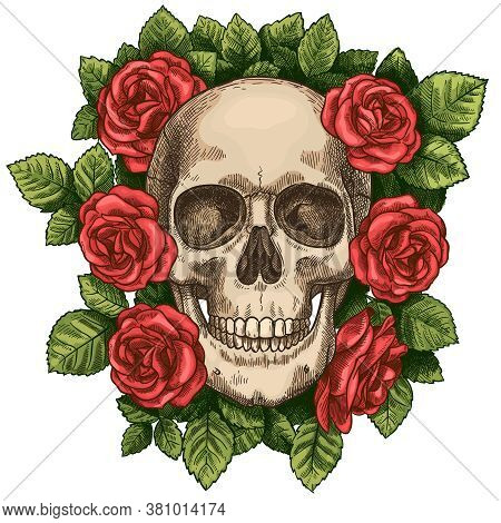 Skull And Roses. Dead Skeleton Head And Red Flowers, Hand Drawn Gothic Tattoo Graphic. Vintage Scary