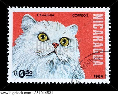 Nicaragua - Circa 1984 : Cancelled Postage Stamp Printed By Nicaragua, That Shows Chinchilla Cat, Ci