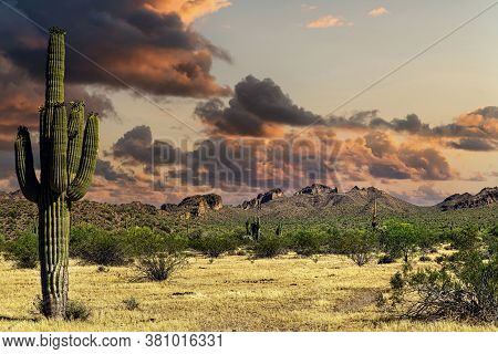 A View Of The Sonoran Desert Near Phoenix, Arizona.