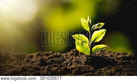 Ecological Friendly And Sustainable Environment. Growing Plant.