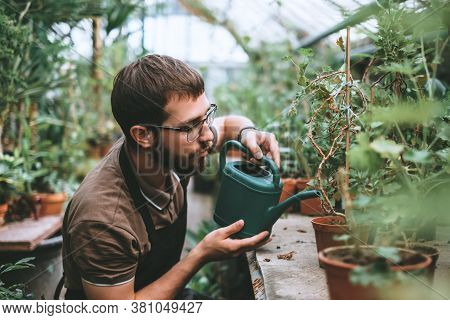 Young Man Gardener Watering Potted Houseplant In Greenhouse, Surrounded By Plants And Pots. Environm