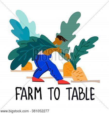 Healthy Farm Food Concept. Fresh Vegetables Concept. Harvesting Concept. Pick Your Own Concept. Man