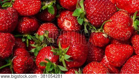 Freshly Picked Strawberries. Strawberry. Food Background. Red Ripe Strawberry Background. Close-up,