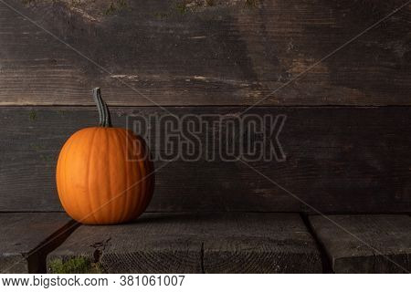 One pumpkin ready to be carved on a dark wooden background with copy space for text