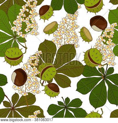Seamless Pattern With Flowers Leaves And Fruits Of Chestnut, Ornament For Fabric And Wallpaper, Scra