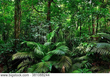 Beautiful Landscape Nature Of Tropical Rain-forest In Thailand.