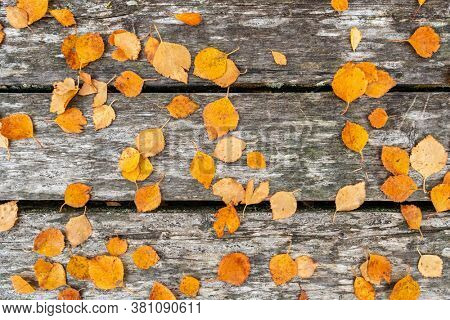 Autumn leaves on wooden boards background. Top view of yellow fall leaves on an old weathered wooden boardwalk