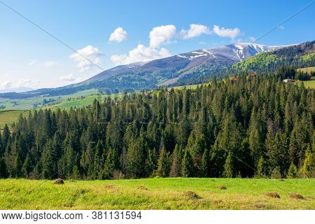 Forest In A Mountain Landscape. Trees On The Grassy Hill Of The Beautiful Scenery. Wonderful Sunny N