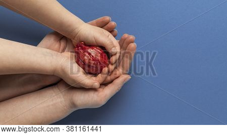 Heart Transplant, Hands Holds Organ On Blue Background. Coronary Surgery, Care For Organ.