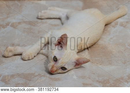 An Orange And White Kitten Lying On The Ground