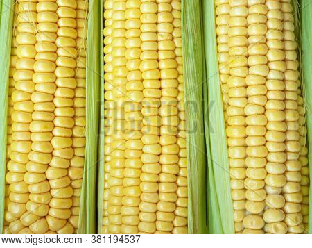 Yellow Corn Abstract Background. Harvest Season, Healthy Organic Nutrition, Maize Cob. Golden Textur