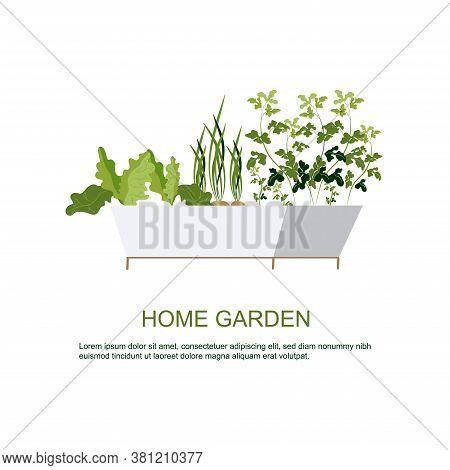 Home Garden. Herbs Garden. Home Gardening. Horticulture. Houseplants. Green Onions, Lettuce, Parsley