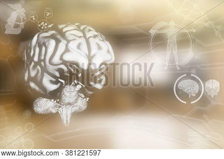 Medical 3d Illustration - Human Brain, Physiology Study Concept - Highly Detailed Electronic Texture