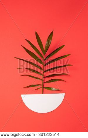 A branch of a green plant in a paper pot on a red background.