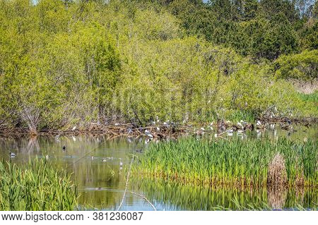 Several Species Of Waterfowl Birds Standing On Fallen Logs In The Water And Some Swimming Eating Pre