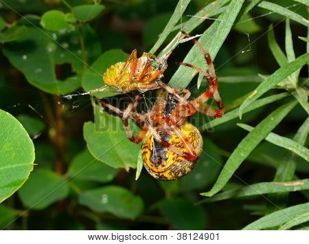 Spider With Bug