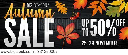 Advertising Banner About Autumn Sale At The End Of Season With Bright Fall Leaves. Invitation For Sh