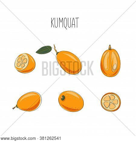 Kumquat Set. Vector Illustration. Whole And Sliced, Leaves. Colorful Sketch Collection Of Tropical F