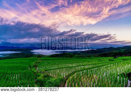 Beautiful Landscape The Rice Terrace Fields At Pa Bong Piang Village Chiang Mai, Thailand.