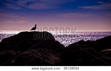 Silhouette Of A Seagull