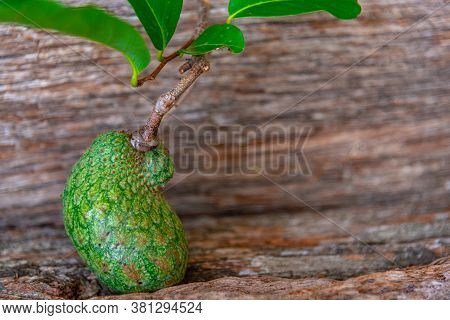 Tropical Fruit Of Atemoia (annona Cherimola Mill X Annona Squamosa L.) On Wooden Background