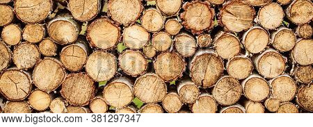 Round Teak Woods Trees Circle Stumps Cutted Group. Deforestation. Tree Stumps Background. Pieces Of