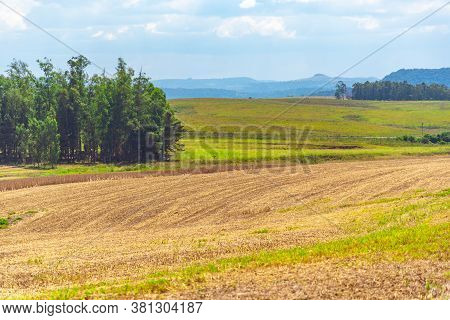 Soybean Cultivation Fields In Southern Brazil After Summer Harvest