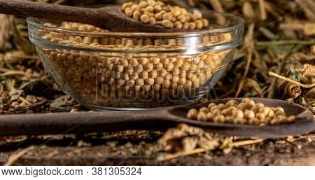 Soya Beans (glycine Max) Scattered On Stage With Wooden Spoon And Glass Container