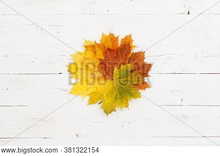 Many Multi-colored Maple Leaves Lie On A Wooden Table. Colorful Autumn Leaves Laid Out In A Circle.