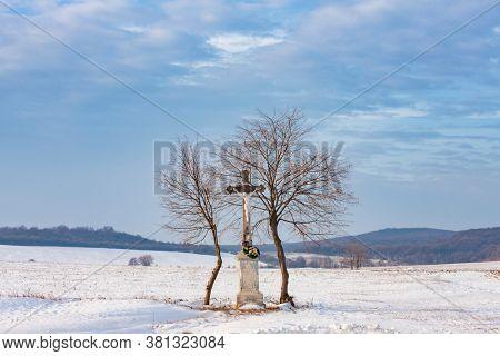 Gods tortue near Velka Trna, Tokaj region, Slovakia