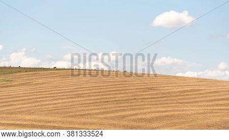 Pasture And Livestock Fields In The State Of Rio Grande Do Sul In Brazil