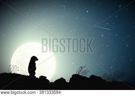 Lonely Little Bear And Shooting Star On Moonlight Night. Baby Animal Silhouette On Rocky Ground. Ful
