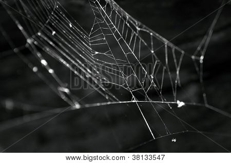 Black and White spider's web in a ruined building