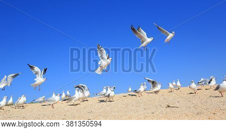 A flock of young seagulls catching food over sandy sea shore