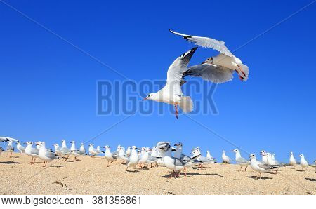 A pair of young seagulls are flying over the flock over the sea sandy coast