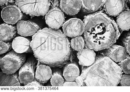 Ideas For Optimizing Images Of A Tree Cut Images In Black And White For Backgrounds, Cross-sections