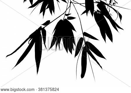 Black Bamboo Leaves On The Background, Illustration With Black Bamboo Branch Isolated On White Backg