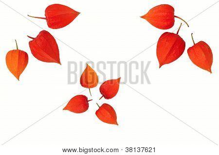 Orange Fruit Boxes Gooseberry