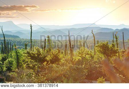 Cactus fields in Mexico, Baja California
