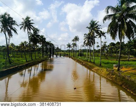 Nature Long Lake With Coconut Trees At Bank And Floating Ducks In It.