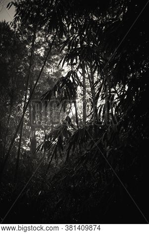 The Silhouetted Natural Beauty Of The Bamboo Plants In Black And White