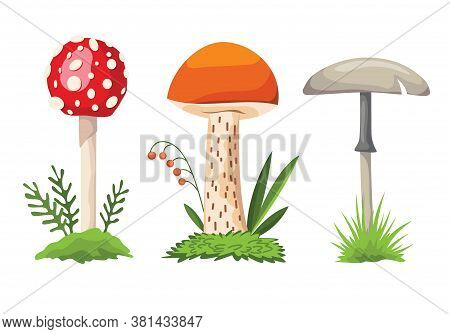 Mushroom And Toadstool. Illustration Of The Different Types Of Mushrooms On A White Background. Colo