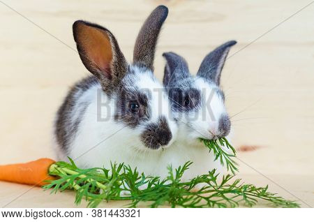 Two Little Rabbits Eating Fresh Vegetables, Carrot, Leaves On Wooden Background.  Feeding The Rodent